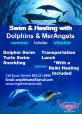 Dolphin Swim & Healing