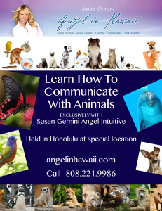 Animal-Communication