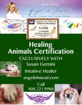Animal Healing Certification