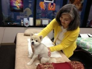Reiki Healing on pets